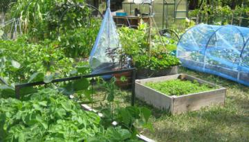 GardeningTips-Storandt