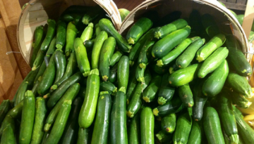 Zucchini-StorandtBlog